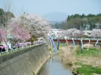2018-04-20千厩川の鯉のぼり46