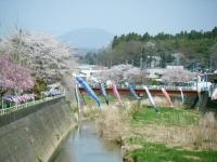 2018-04-20千厩川の鯉のぼり45