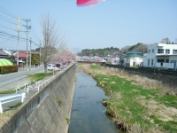 2018-04-20千厩川の鯉のぼり44
