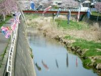2018-04-20千厩川の鯉のぼり54