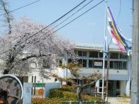 2018-04-20千厩川の鯉のぼり50