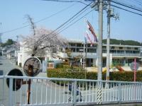 2018-04-20千厩川の鯉のぼり49