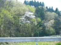 2018-04-28しろぷーうさぎ04