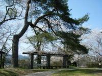 2018-04-19弥あ館山公園20