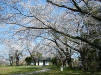 2018-04-19弥あ館山公園18