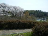 2018-04-19弥あ館山公園26