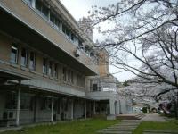 2018-04-17千厩支所の桜ーしろぷーうさぎ72