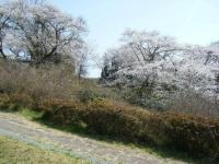 2018-04-19弥あ館山公園34