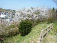 2018-04-19弥あ館山公園31
