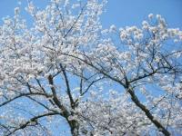 2018-04-19弥あ館山公園40