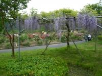 2018-05-13花と泉の公園-牡丹園006