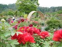 2018-05-13花と泉の公園-牡丹園010