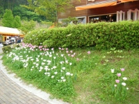2018-05-13花と泉の公園-牡丹園007