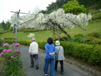 2018-05-13花と泉の公園-牡丹園031
