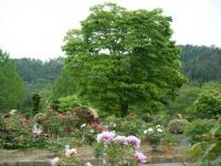 2018-05-13花と泉の公園-牡丹園037