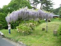 2018-05-13花と泉の公園-牡丹園054