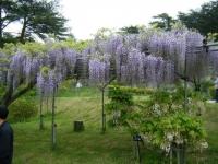 2018-05-13花と泉の公園-牡丹園059