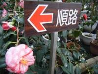 21回大船渡椿祭り2018-03-10重箱石190