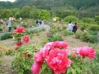 2018-05-13花と泉の公園-牡丹園065