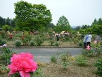 2018-05-13花と泉の公園-牡丹園072