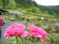 2018-05-13花と泉の公園-牡丹園071