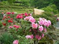 2018-05-13花と泉の公園-牡丹園068
