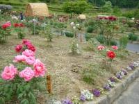 2018-05-13花と泉の公園-牡丹園077