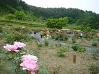 2018-05-13花と泉の公園-牡丹園074