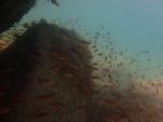 魚の濃度が濃い!!(笑)