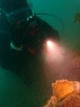 海藻の座布団