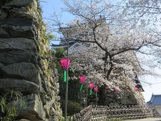 浜松城公園 桜