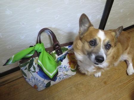 花柄のバッグと緑のスカーフエコバッグと犬
