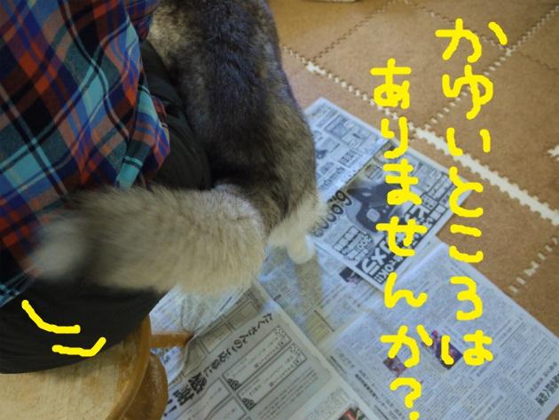P2250132.jpg