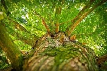 04小tree-1750784_1920
