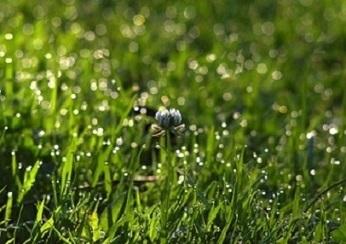 06小clover-2513788_1920