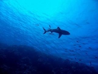 11小shark-2683184_1920