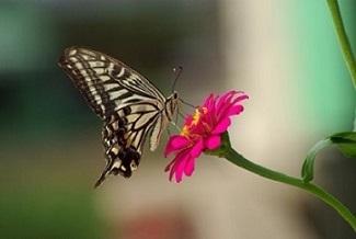 07小butterfly-3253089_1920