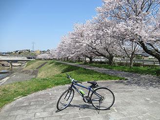 富雄川桜づつみモデル事業公園05