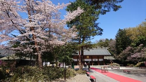 櫻木神社と桜