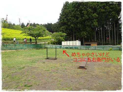 DSC01532h.jpg