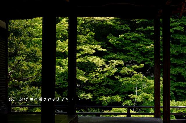 京都・隨心院 春色の庭園7