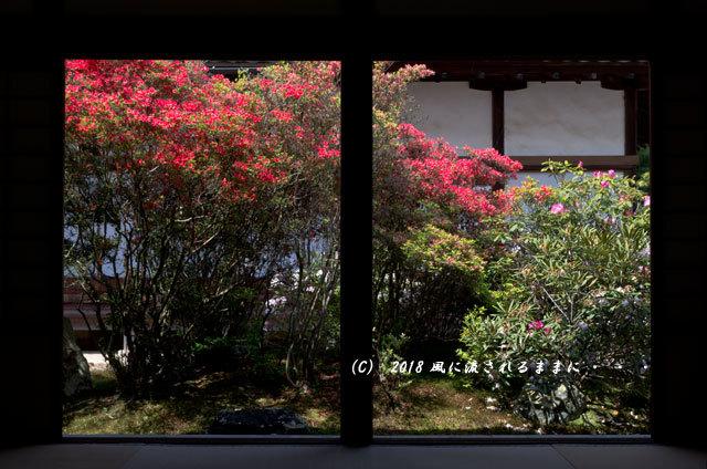 京都・隨心院 春色の庭1