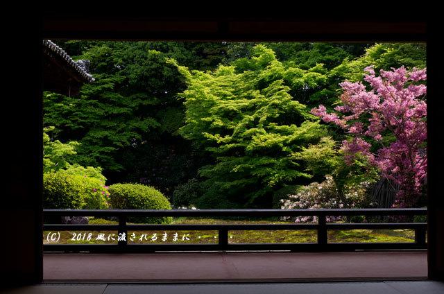 京都・隨心院 春色の庭園2
