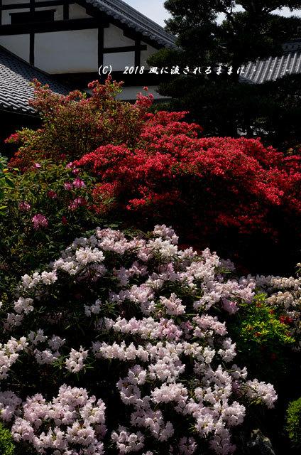 京都・隨心院 春色の庭園3