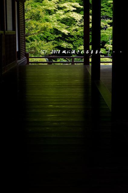 京都・隨心院 春色の庭園8