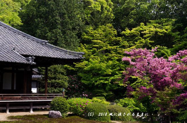 京都・隨心院 春色の庭園9