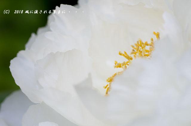 奈良・石光寺 春爛漫の庭園 2018年4月21日撮影15