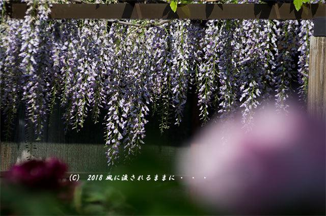 奈良・石光寺 春爛漫の庭園 2018年4月21日撮影7