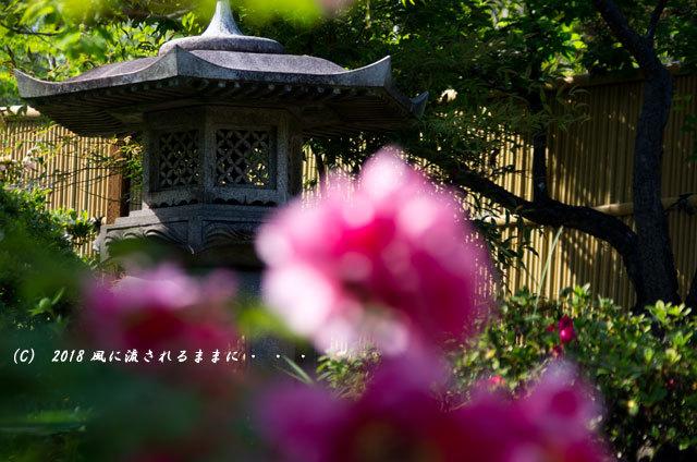 奈良・石光寺 春爛漫の庭園 2018年4月21日撮影9