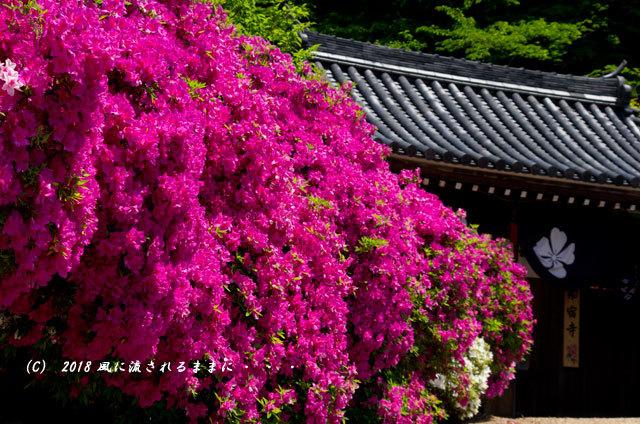 奈良・船宿寺 ツツジが咲き誇る庭園2
